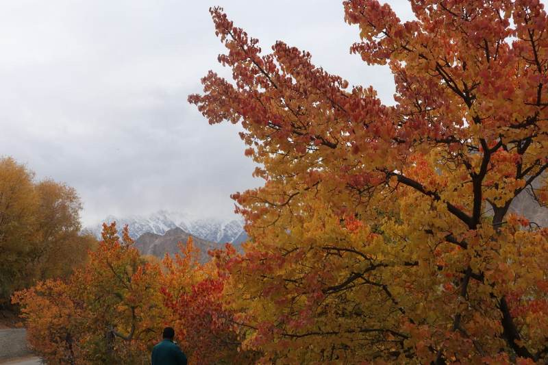 Autumn in Hunza Valley