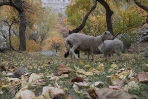 Beauty of Gilgit Baltistan in Autumn