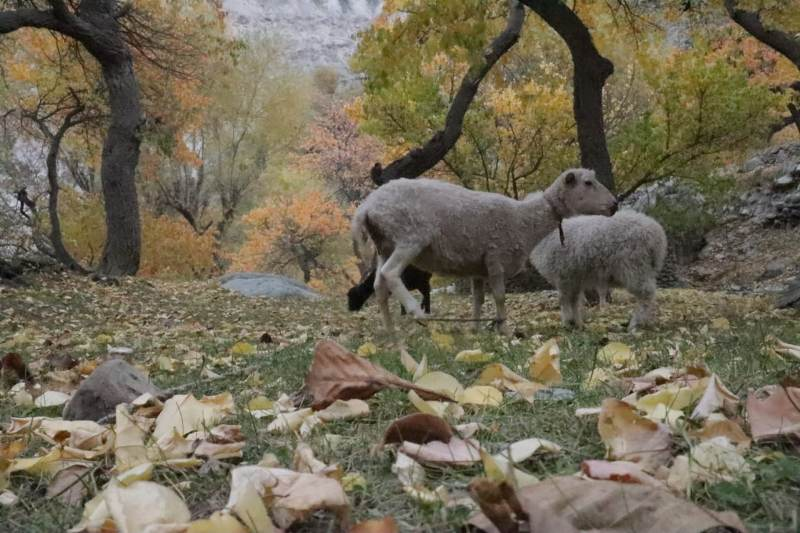 Beauty of Gilgit Baltistan in Autumn
